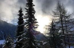 Ever-green | Oak Wise: Poetry Exploring an Ecological Faith