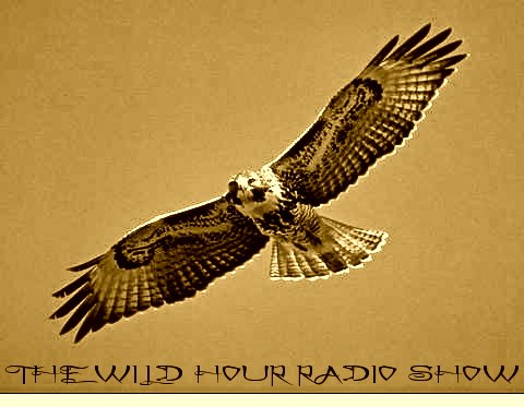 Interview on The Wild Hour Show | Hosted by Emmy Winning Filmmaker Alan Cooke