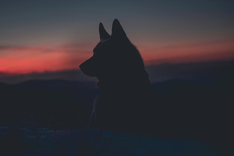 Lobo | A Poem